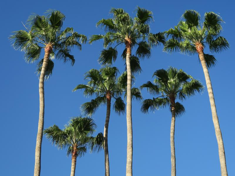 palm trees 3404225 1920